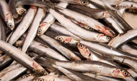 Picture of Boquerones Mexican Fish Recipe- Item No.599-boquerones